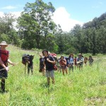 bushwalk for teens CEL